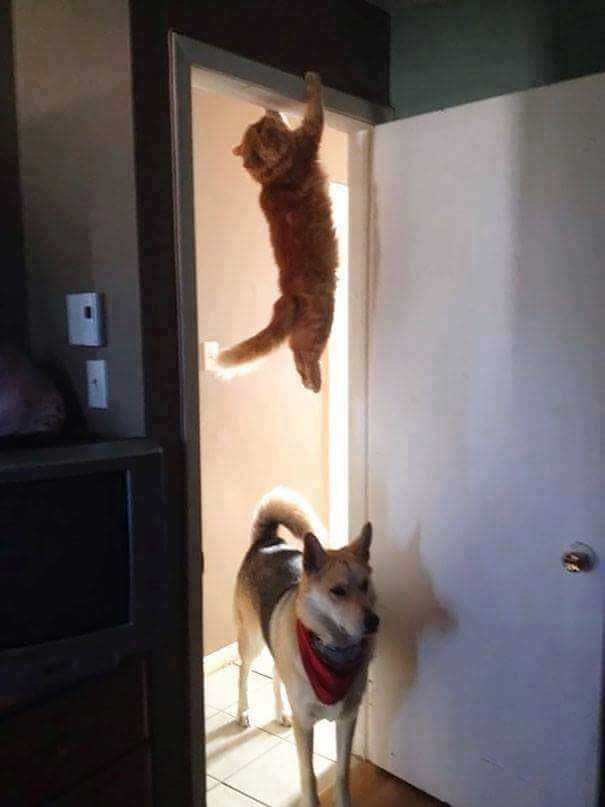 Image of cat hanging above dog.